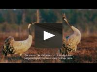 "Embedded thumbnail for Filma ""Putni ierakumos"", 2017"