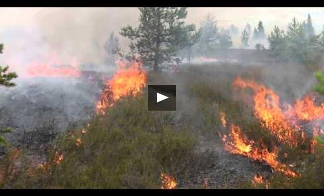 """Embedded thumbnail for Restoration of heath by the controlled burning in """"Adazi"""""""