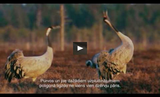 """Embedded thumbnail for Filma """"Putni ierakumos"""" aicina iepazīt dabas un karavīru mijiedarbību """"Ādažos"""""""