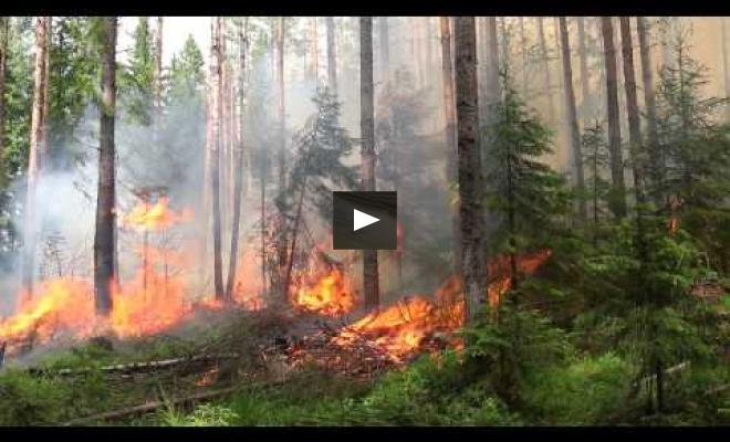 Embedded thumbnail for Study trip to Finland - controlled burning of the forest undergrowth
