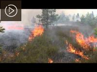 "Embedded thumbnail for Restoration of heath by the controlled burning in ""Adazi"""