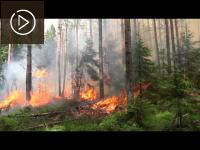 Embedded thumbnail for Study trip to Finland - controlled burning of forest undergrowth