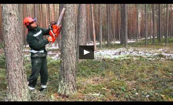 Embedded thumbnail for Sausās koksnes daudzuma palielināšana mežā